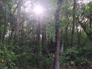 Little Econ Trail VII on 3-12-15